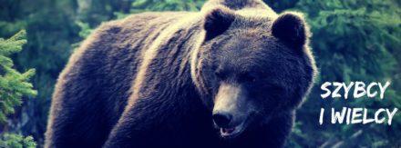 Niedźwiedzie z TPN2