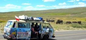 Bizony w Parku Narodowym Yellowstone