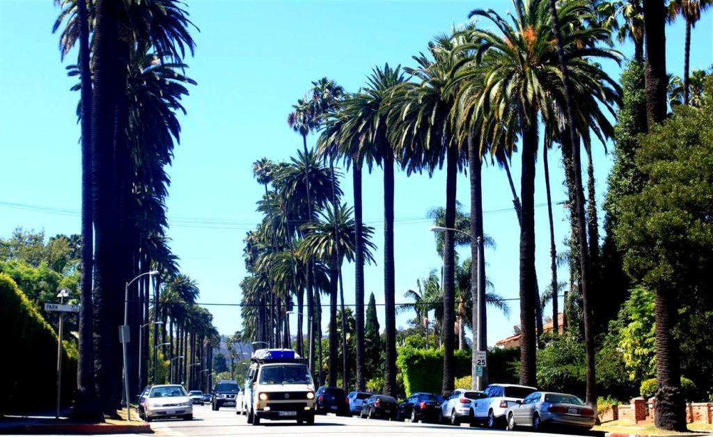 Droga pośród palm - Kalifornia