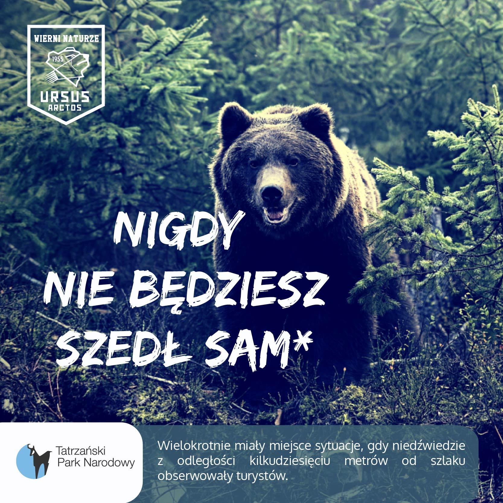 Niedźwiedzie z TPN