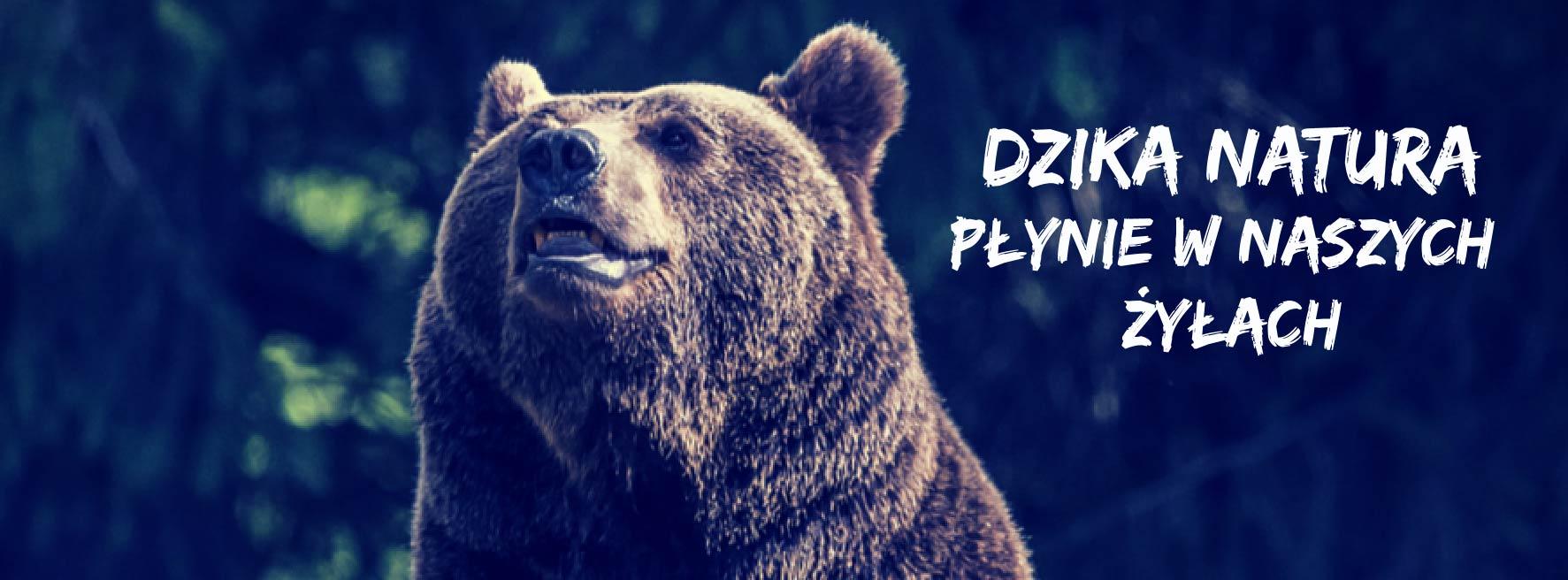 Niedźwiedzie z TPN3