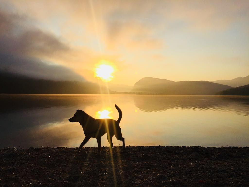 Zocha na tle świtu jeziora Bohinj w Słoweni